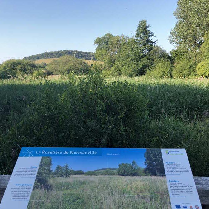 Panneau Roselière de Normanville Nature Le Mesnil-Lieubray Nature