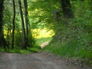 Chemin de randonnée à La Feuillie