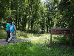 Route forestière de la forêt domaniale de Lyons à Mont-Rôty