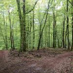 Randoroman en forêt